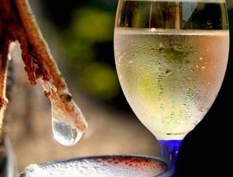 рецепты березового вина