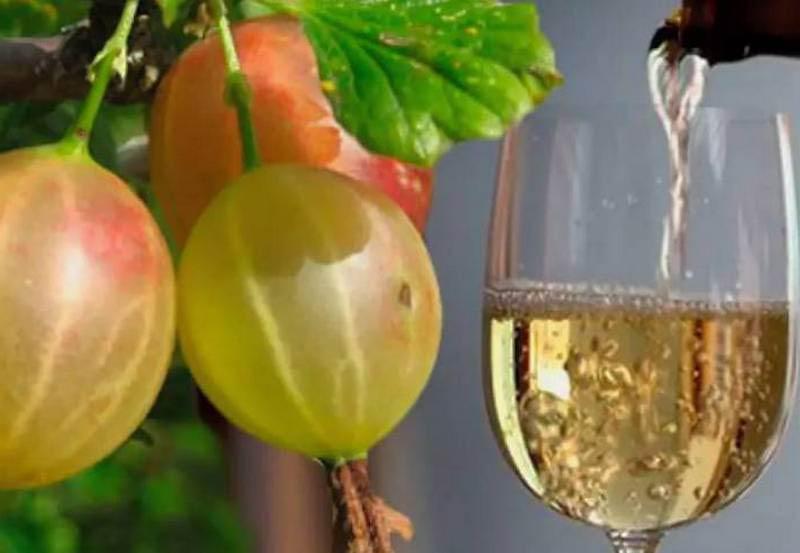 рецепт вина из ягод крыжовника