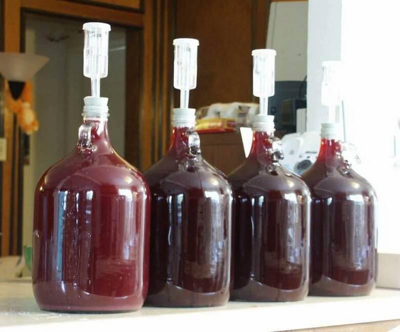 брожение вишневого вина