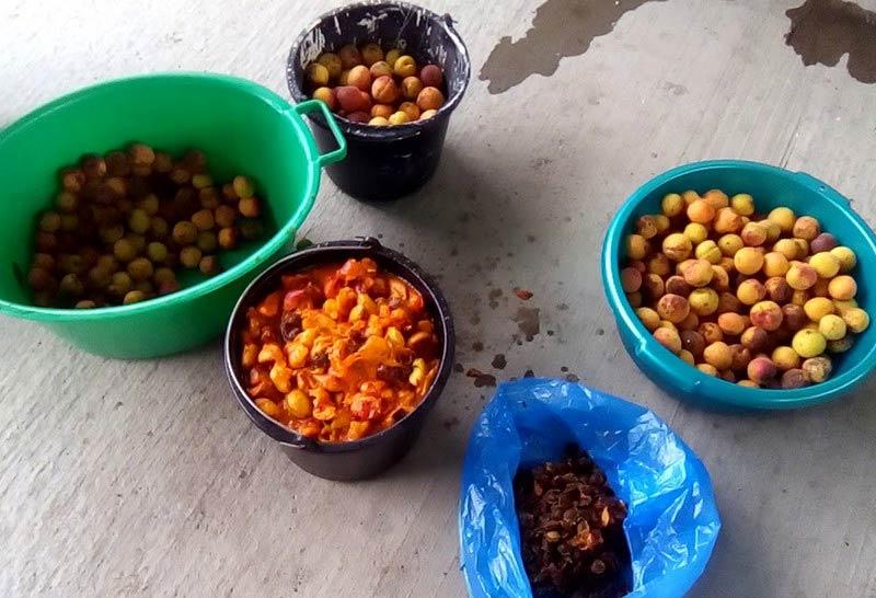ингредиенты абрикосовой браги
