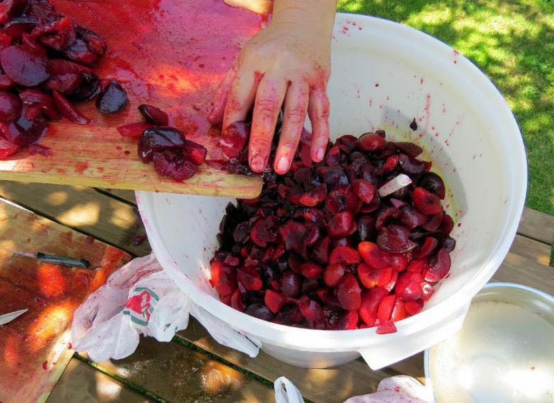 приготовление сливового вина