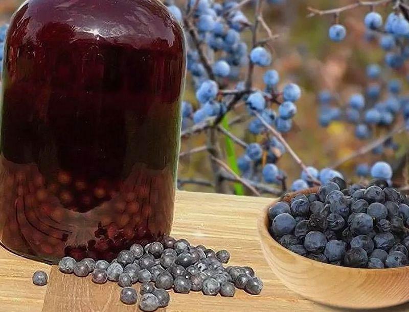 вино из ягод терна